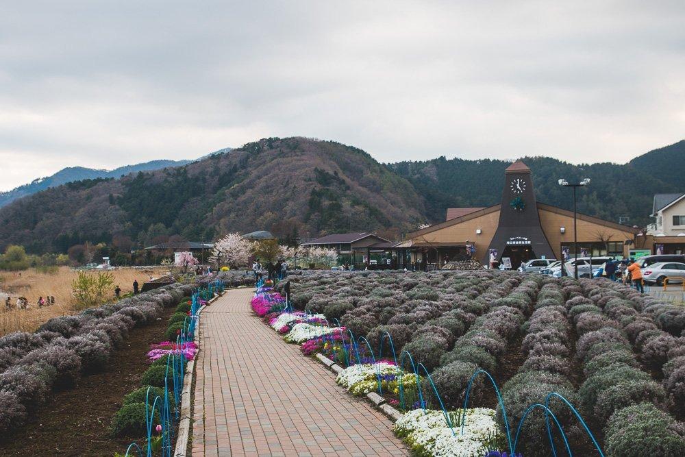 Park Oishi, Lake Kawaguchiko