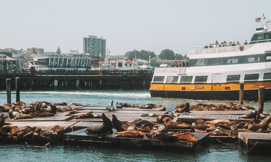 Sea lions Pier 39, San Francisco, 2-week US itinerary
